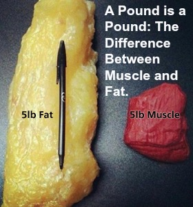 A Pound is a Pound: The Difference Between Muscle and Fat ...